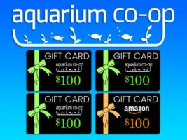 $100 Gift Card Giveaway header